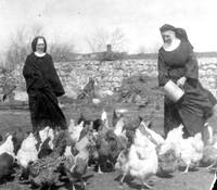 Benedictine sisters feeding their chickens