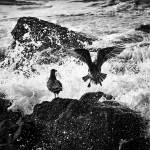 """Sea Gull and serf"" by memoriesoflove"