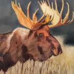 """Bull Moose"" by jacquelinebrewerart"