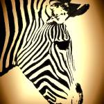 """ZEBRA HEAD SHOT"" by frankreggio"