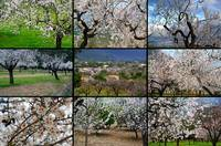 Spring Time - Blooming Trees