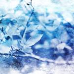 """Blueberry Blues"" by GracefulFoto"