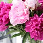 """Peonies on the Porch 2"" by Groecar"
