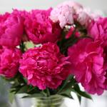 """Wonderful Peonies"" by Groecar"
