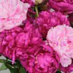 """""""Peony Bouquet"""" by Groecar"""