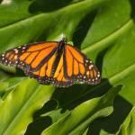 """""""Basking Butterfly"""" by julieandel"""