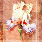 """Gorgeous Iris Decorative Painting"" by IrinaSztukowski"