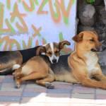 """""""Dogs Lying on a Sidewalk"""" by rhamm"""