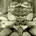 """""""Botanical Panoramas"""" by frankreggio"""