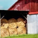 """Barn and hay"" by BrendaSalyersArt"
