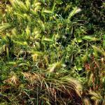 """""""Wild Grass Garden"""" by RCdeWinter"""