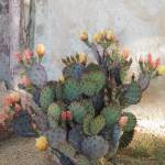 """Blooming Cactus"" by GordonBeck"