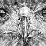 """Eagle Focus"" by 2dogstudio"