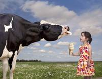 Cow Licking a Girl's Ice Cream Cone