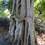 """""""Tree Huggers"""" by Groecar"""