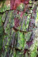Beautiful Bark