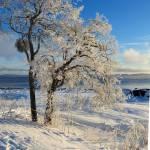 """""""Winter Glory"""" by GracefulFoto"""
