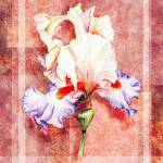 """Decorative Iris Flower Collage"" by IrinaSztukowski"