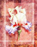 Decorative Iris Flower Collage
