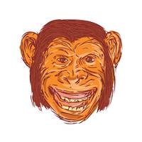 Chimpanzee Head Front Isolated Drawing