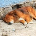 """""""Sleeping Dog Next to a Wall"""" by rhamm"""