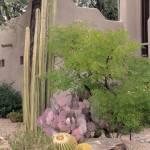 """""""Desert Flair"""" by GordonBeck"""