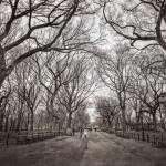 """Central Park, New York City"" by lillisphotography"