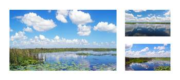 Skyscape Reflections Blue Cypress Marsh Collage 2