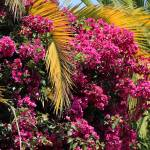 """Purple Flowers and Palm Leaves"" by rhamm"