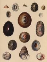 The zoology of Captain Beechey's voyage 1825 - She