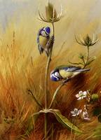 Thorburn_Archibald_Bluetits_On_A_Teasel