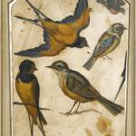 """16th Century ITALIAN SCHOOL ,Five Studies of Birds"" by motionage"