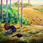 Osceola turkeys - Hay-Field Confrontation