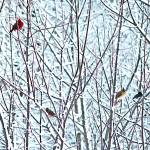 """Birds in Snow"" by SplitWindow"
