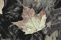 The Autumn Leaf ~ Digital Art Photograph