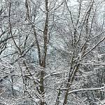 """Tops of Snowy Trees"" by SplitWindow"