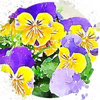 Pansies in the Round