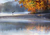 autumn river fog with heron