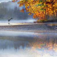 """autumn river fog with heron"" by R Christopher Vest"