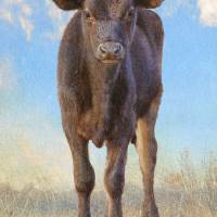a new neighbor-- little calf by r christopher vest