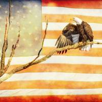 American Bald Eagle Salute Art Prints & Posters by James