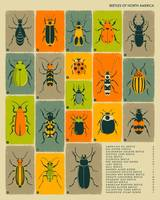 Beetles of North America