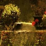"""""""The Hidden Garden"""" by RCdeWinter"""