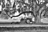 John Deere under the Oak