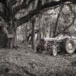 """Massey Ferguson and the Oak"" by Hansen"
