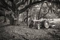 Massey Ferguson and the Oak