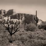 """Out Arizona Way"" by GordonBeck"