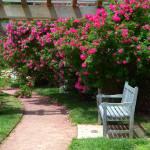 """""""The Garden Path DSC_0826"""" by TaylorMadeArt.US"""