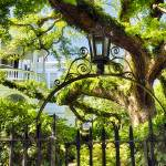 """Charleston Live Oak Tree"" by George_Oze"