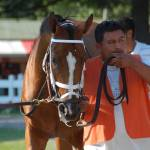 """Racing Horse at Saratoga Springs, NY"" by snarkphoto"